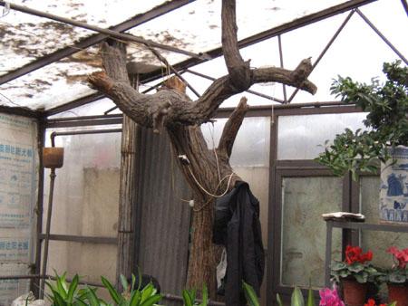 他告诉记者,树木是由树根,树杆,树枝和树皮组成,而主要养分从树根部位