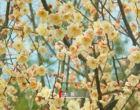 野生花卉名称大全