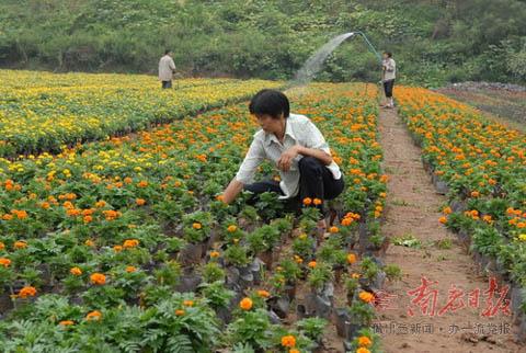 规模花卉苗木基地