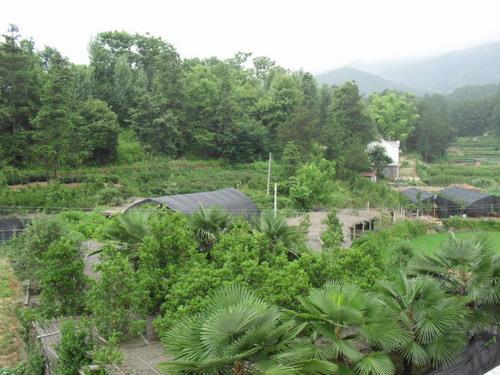 孙大学:五峰山下的绿色致富领头雁